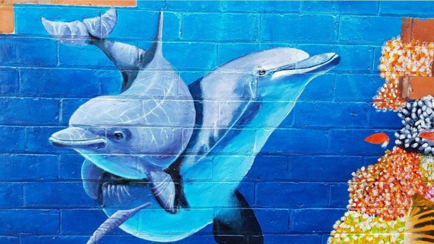 Dolphins 68 Mangan st